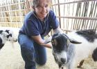 Jesi Harvey examines a goat at the Live Oak Veterinary Clinic Tuesday. Harvey comes to Jacksboro after practicing in Weatherford.  Photo / Cherry Rushin
